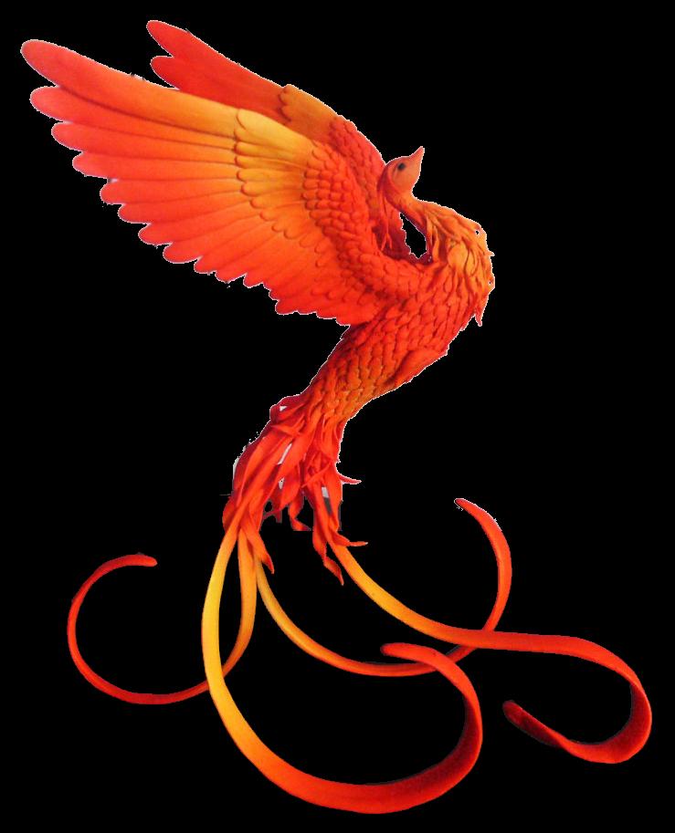 Phoenix FTA Limited